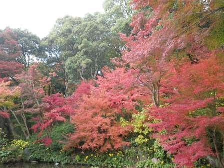 須磨離宮公園の写真5