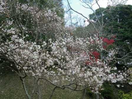 須磨離宮公園の写真7