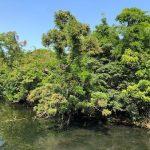 🏖泥炭で浮いている不思議な生態系の『浮島の森』