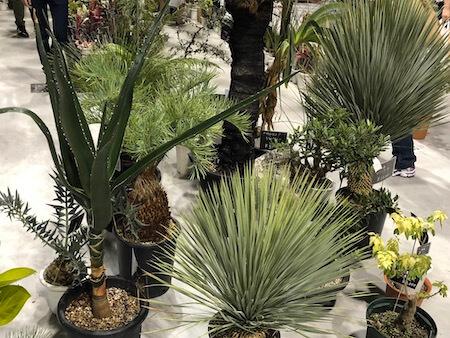 天下一植物界で展示されていた観葉植物の写真