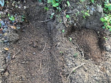 ライチ植え付け前の土壌改良写真2