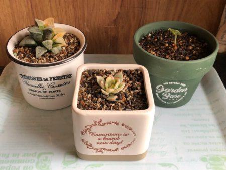ダイソーで購入した鉢に植物を植え付けた写真