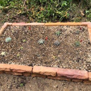 【多肉植物で庭造り】庭にはめ込み式の花壇ブロックでおしゃれな多肉花壇を作ろう!