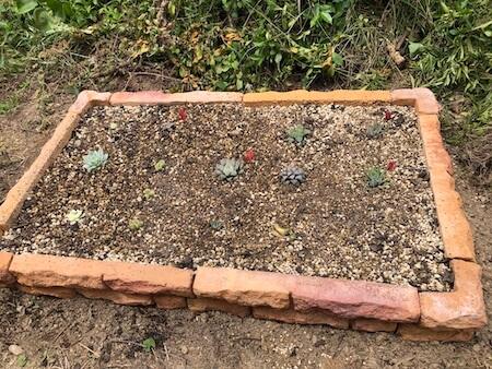 花壇に多肉植物を植え付けた写真