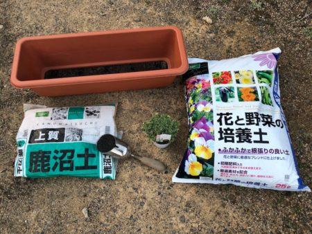 斑入りのオレガノ『カントリークリーム』の植えつけ写真