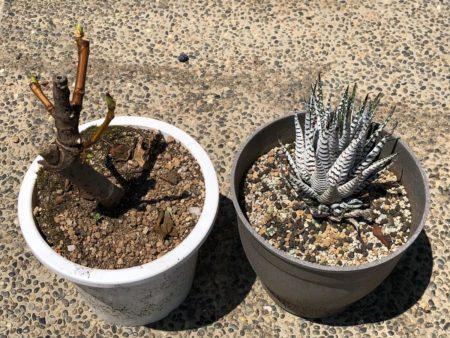コンクリートの上に置いた植物