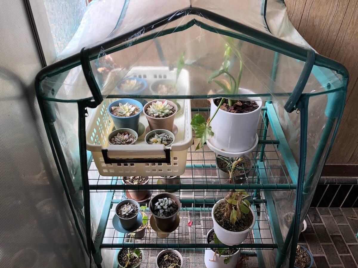 室内のビニール温室を正面からみた写真