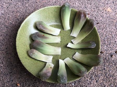 オブツーサの葉挿し写真1